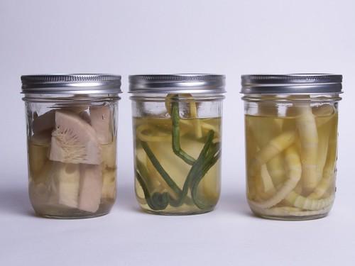 evolve-companies-halloween-blog-laboratory-specimen-jars