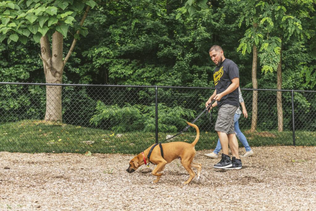 guy walking dog at dog park evolve